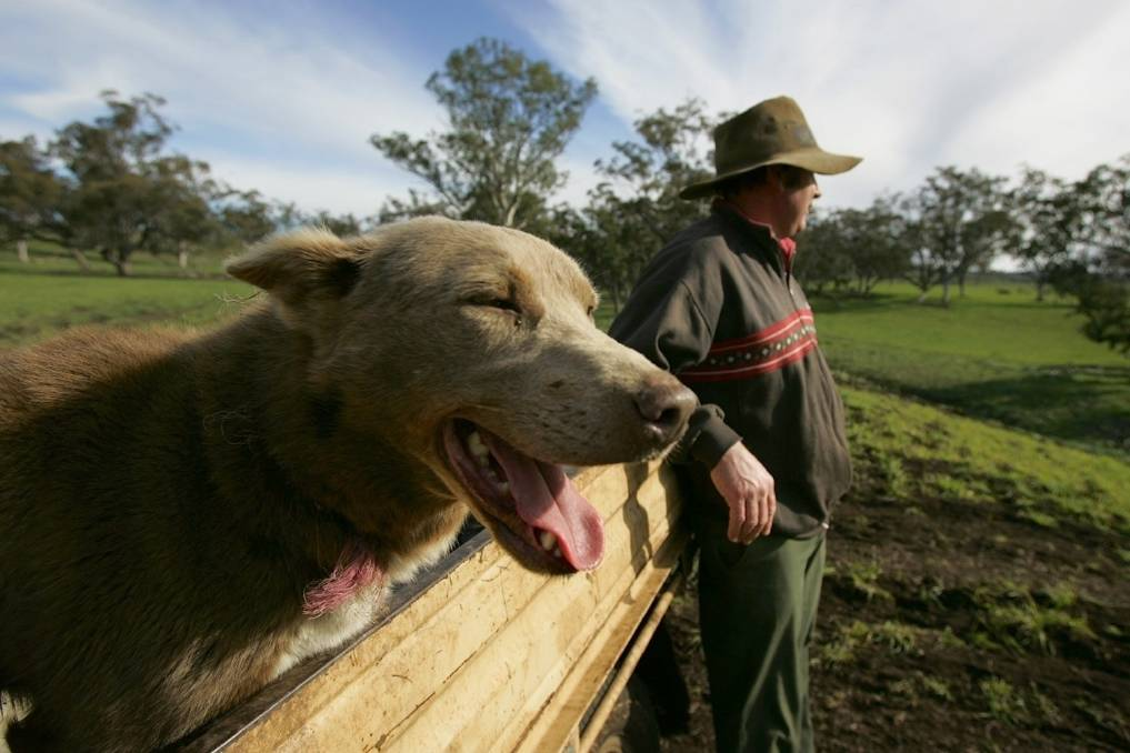 The deadly dog disease ehrlichiosis has now been found in most parts of Australia.